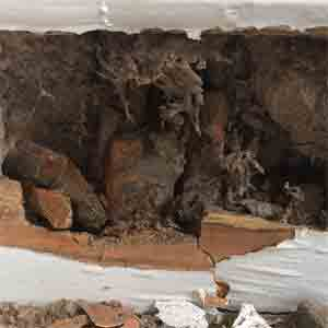 dry rot skirting board London
