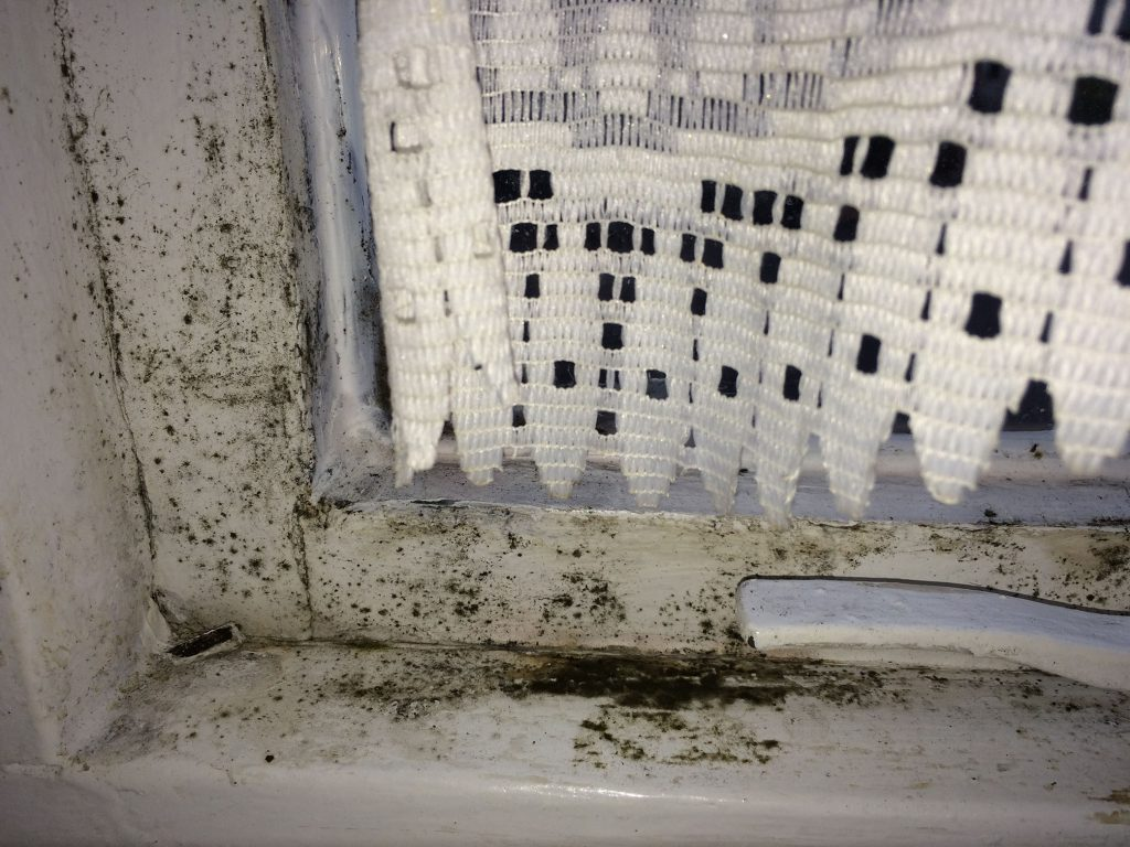 mould by window
